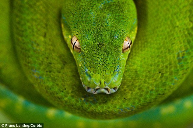 Evil green snake head with yellow eyes